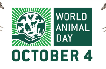 Help World Animal Day 2015 by Doing any of These Things 3
