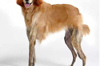 Revealed: Meet the Nation's Favourite Dog 5