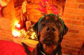 3 Ways to Make This Christmas Your Dog's Best One Yet 3