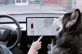 Is Tesla's New 'Dog Mode' Good or Bad For Dogs? 3