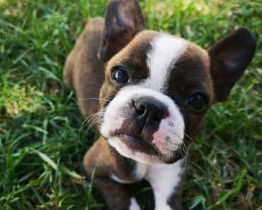 New Study Reveals 4 in 10 Dogs Show Signs of Stress 13