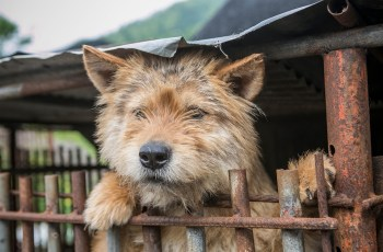 Campaigners Announce South Korea to Shut Down Notorious Gupo Dog Meat Market 3