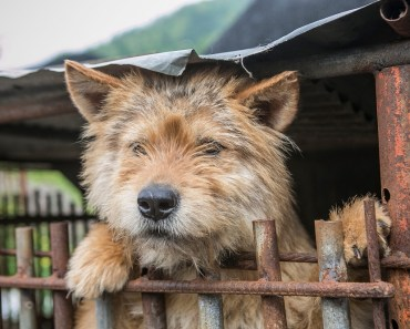 Campaigners Announce South Korea to Shut Down Notorious Gupo Dog Meat Market 15