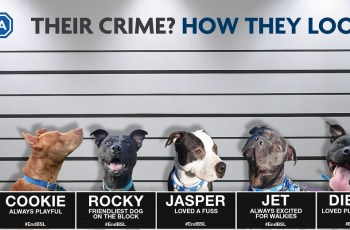'The Law Is Letting Down Dogs Who Look a Certain Way', RSPCA Says 2