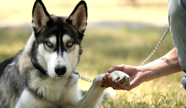 Top 12 Best Dog Breeds For Guys Dog Notebook