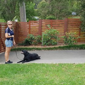 labrador training sydney