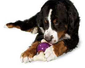 top toys for bored dogs