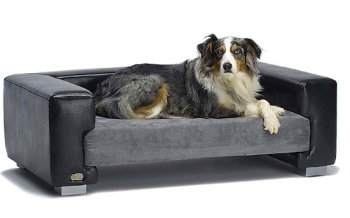 Best Couches For Dogs Top Dog Couches And Review