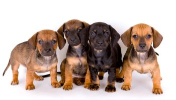 Puppy Mills: The Horrific Truth