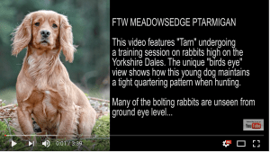 Click to Watch: Rabbit Shooting Over a Cocker Spaniel Filmed with a 3DR Drone