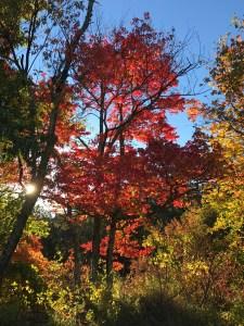 Fall, 2016