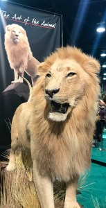 Taxidermy is a big part of the Safari Club gathering. Great mane on this lion.