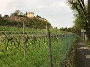 Vineyards in front of the Castle of Brescia