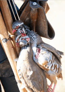 Red-legged partridge shooting in Spain with Delaney & Sons: European shooting specialists