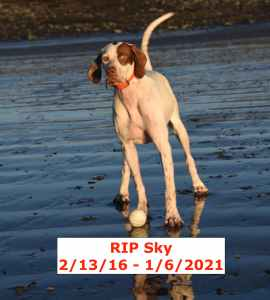 My pointer Sky, 2/13/16 - 1/6/2021
