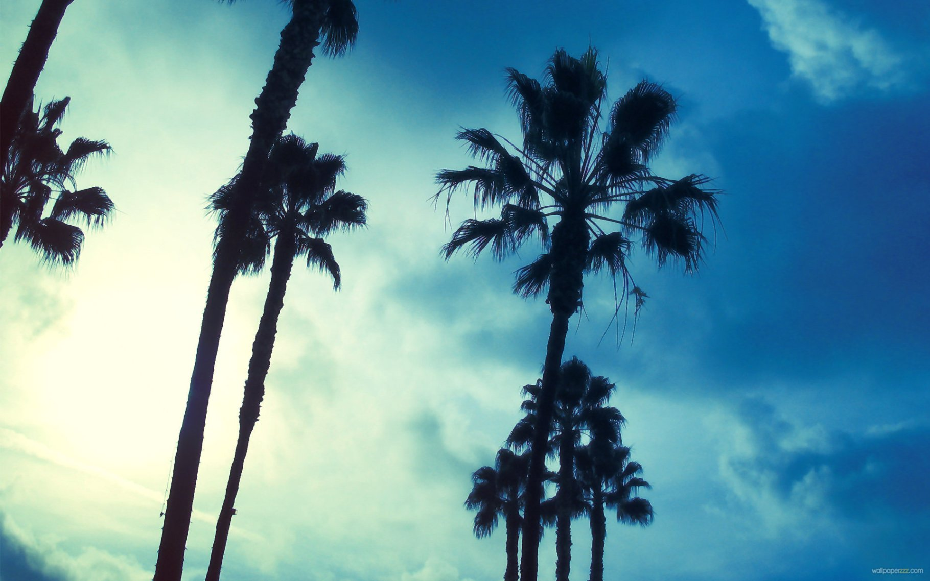 Palmtrees Please!: The Edit