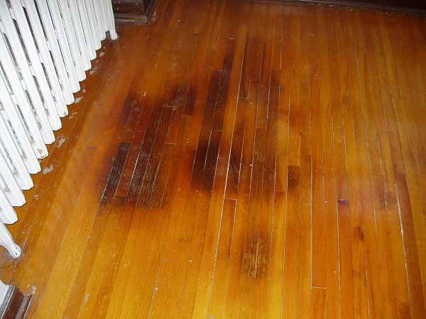 Image Result For How To Get Rid Of Dog Urine Smell In Carpet