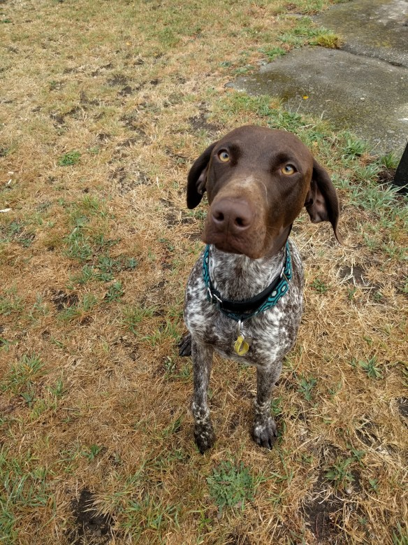 Dogs Walks in Golden, Lakewood, Applewood, Wheat Ridge and the greater Denver Area.