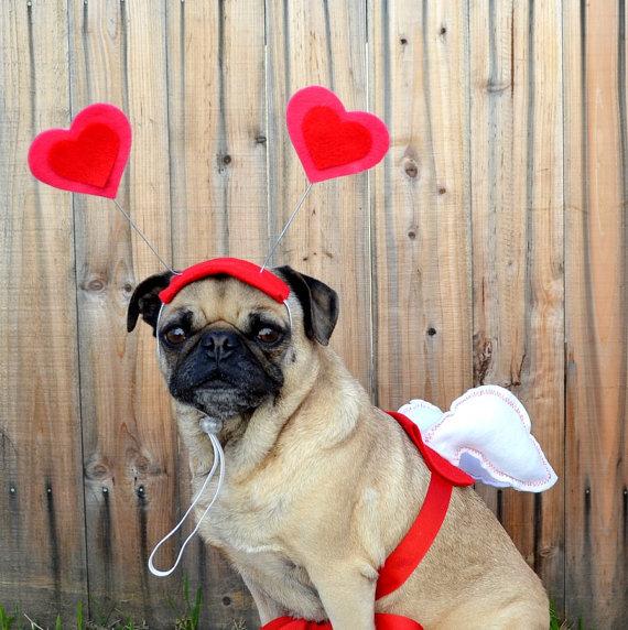 pug wearing cupid costume
