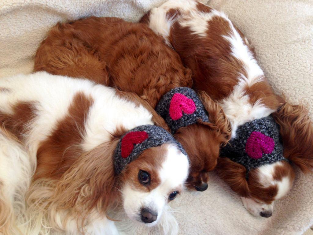 dogs wearing heart snoods