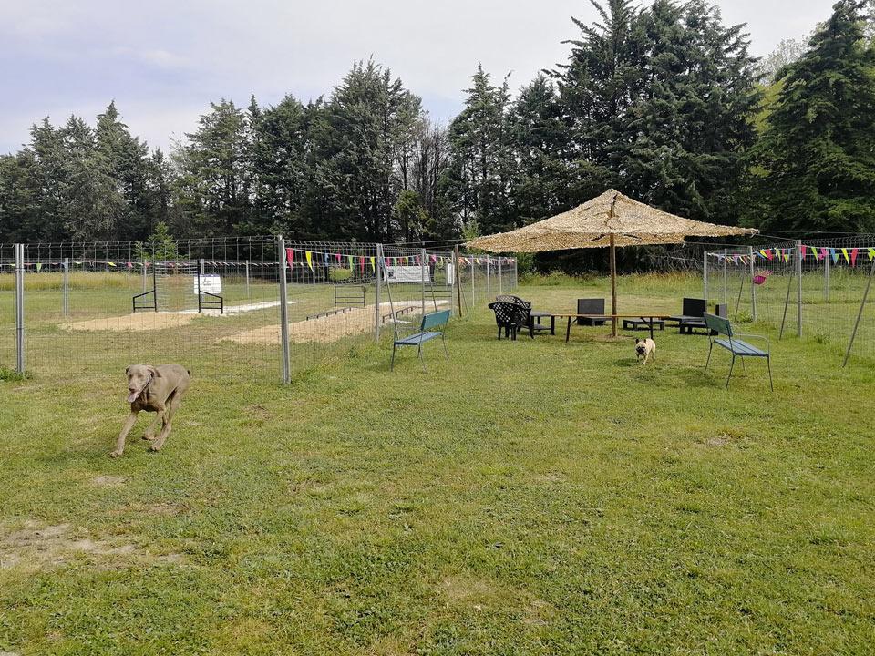Centre Canin Saint Remy de Provence