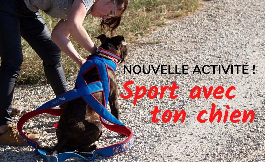 Nouvelle Activité : Sport avec ton chien