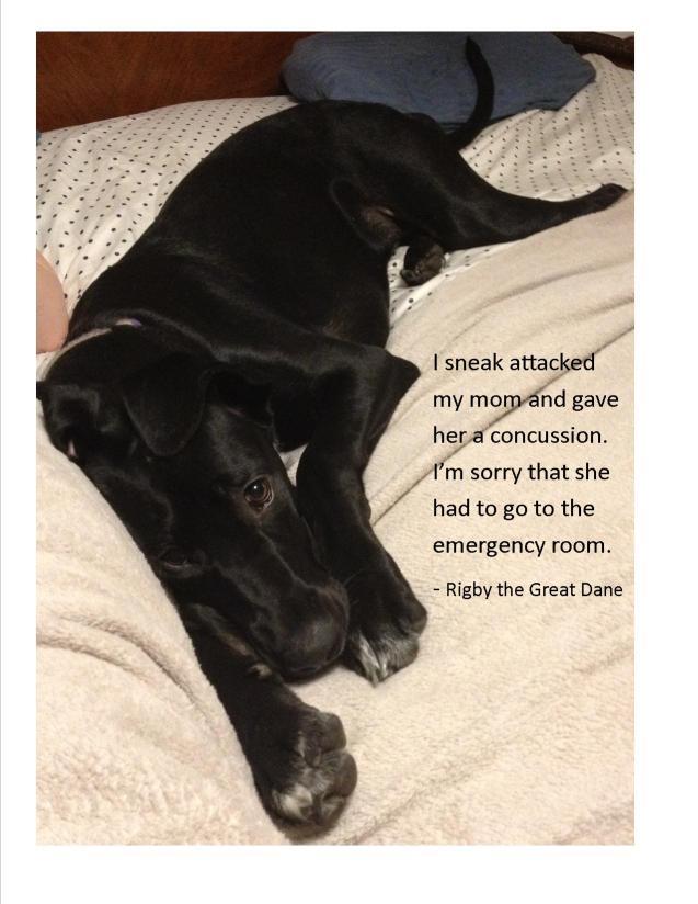 Dog-Shaming6