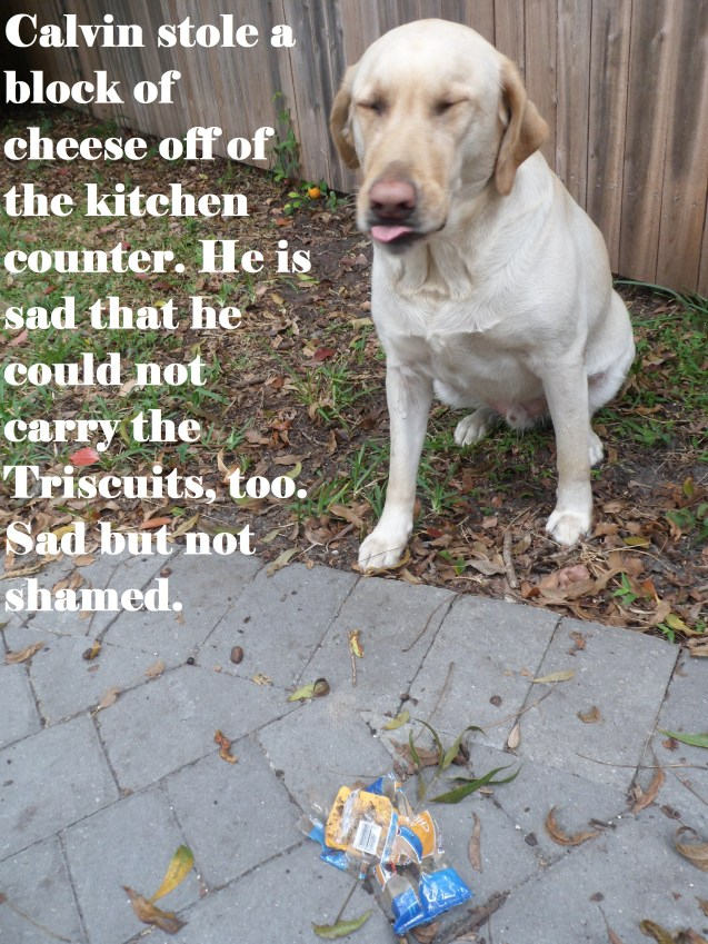 dogshaming19