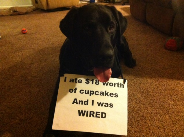 Dog-shaming1