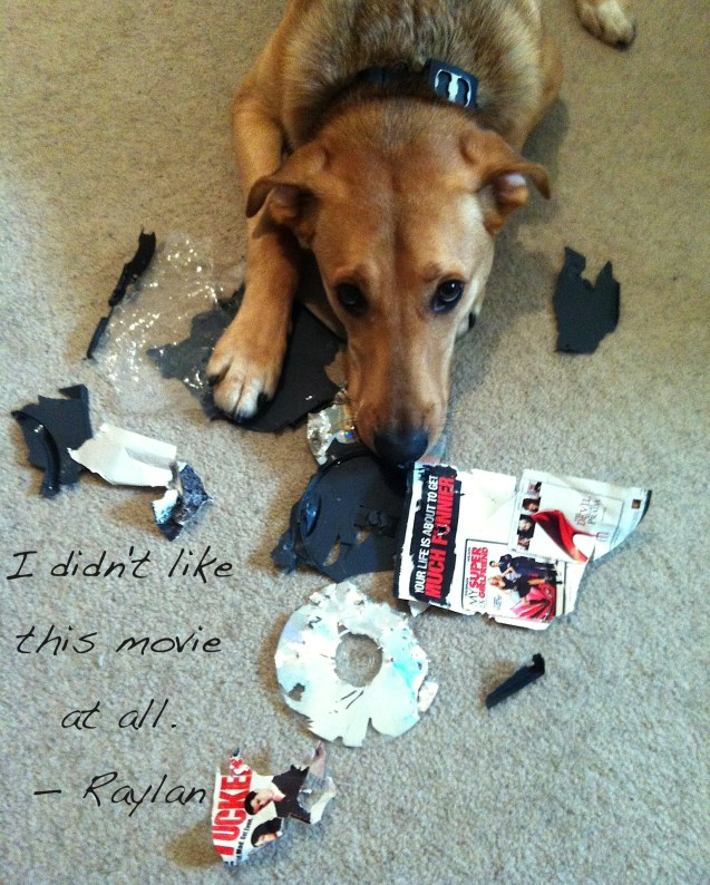 Raylan-Dog-Shaming