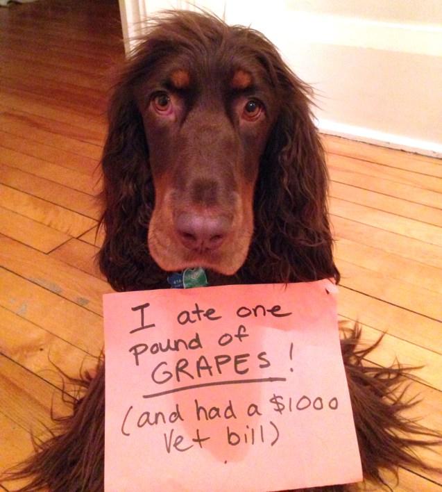 arfie_grapes
