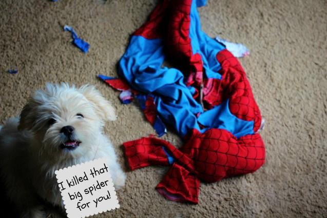 killed-spiderman