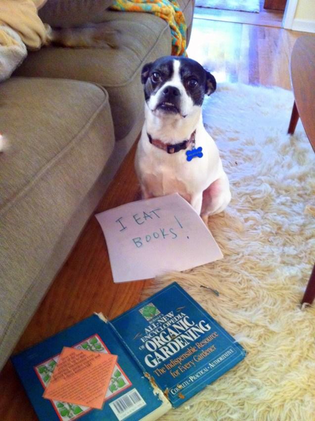 I-eat-books
