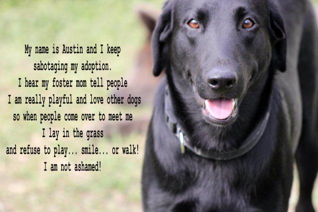 austin2-062-dog-shaming