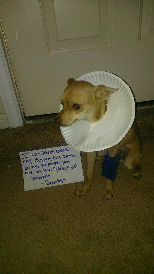 plate-of-shame