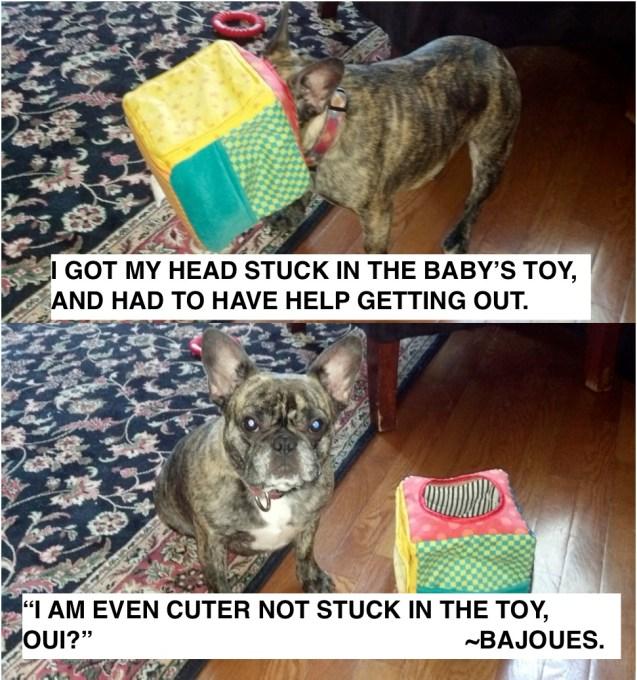 Bajoues-Dog-Shaming
