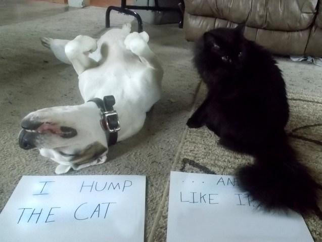 humpcat.jpg