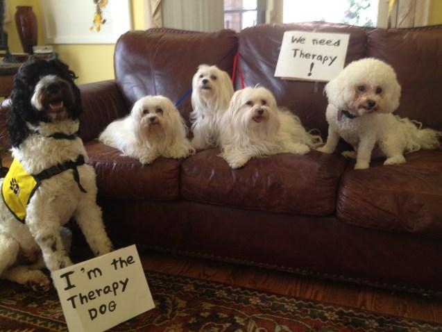 Reverse-Dog-Shaming