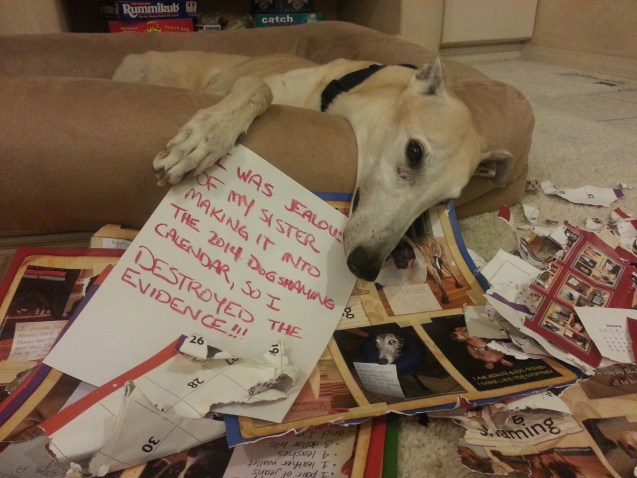 apollo_dogshaming