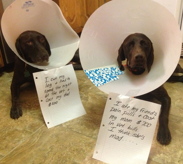 dogs-in-cones