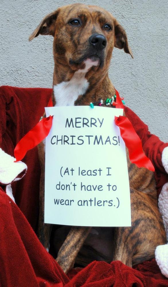 ChristmasBrody