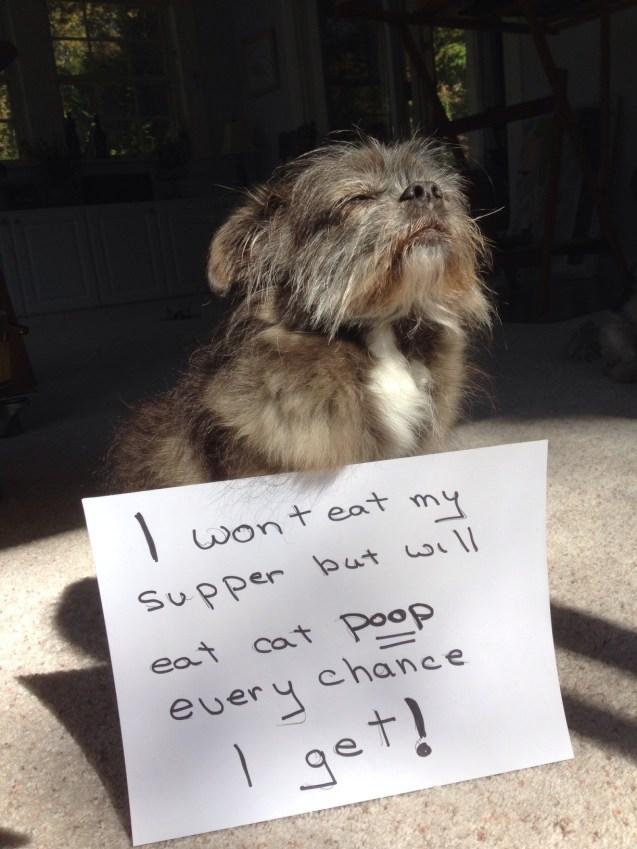 Hazel-Dog-Shaming