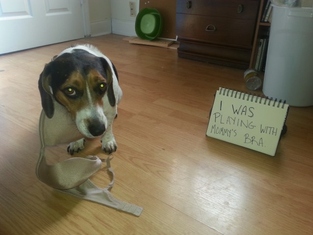 Laverne-dog-shaming