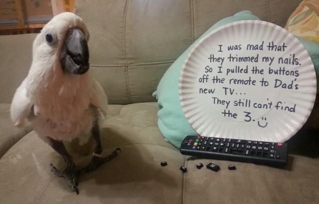 birdshaming