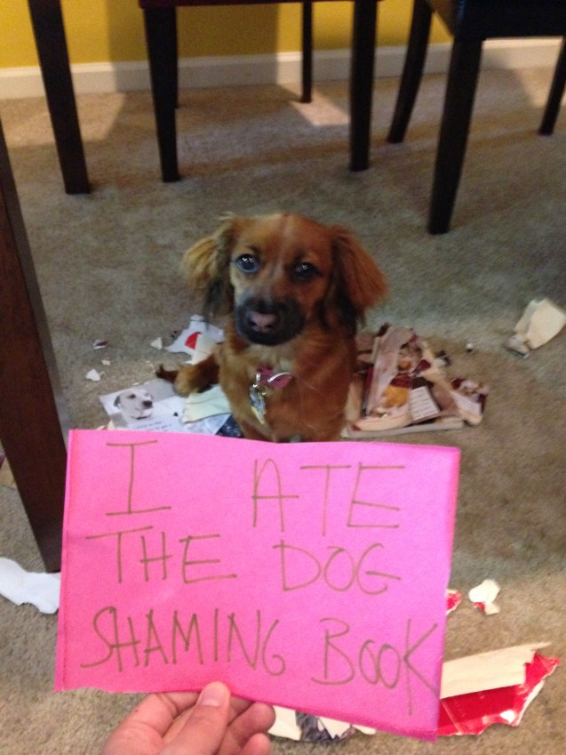 Truffle-Ate-the-Dog-Shaming-Book