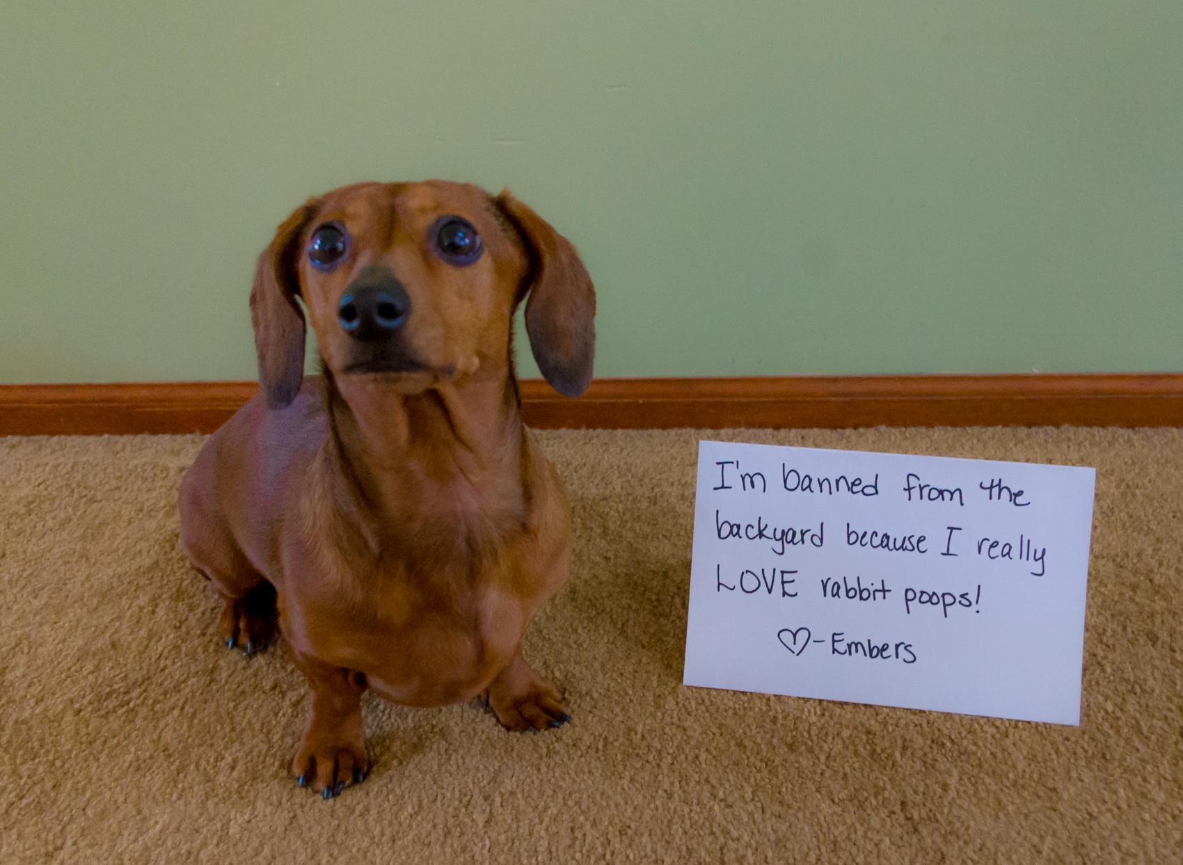 Dog Poop Backyard - audidatlevante.com