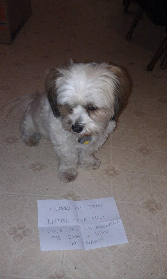 toby-dog-shame