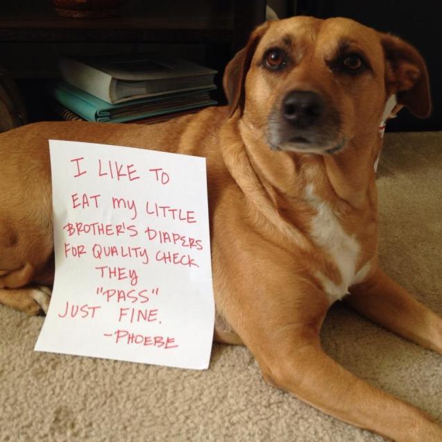 dog-shame