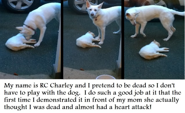 RC_Charley