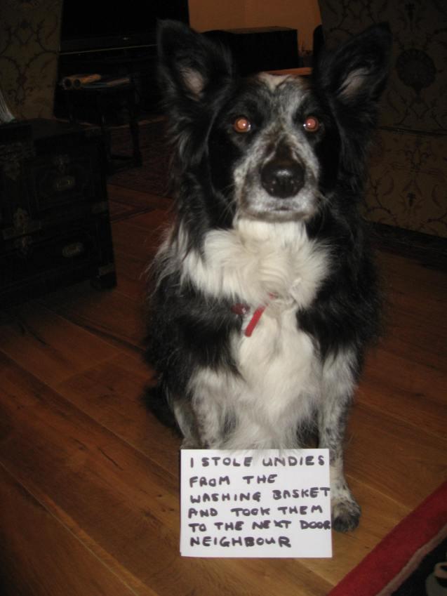 dog-shaming-009